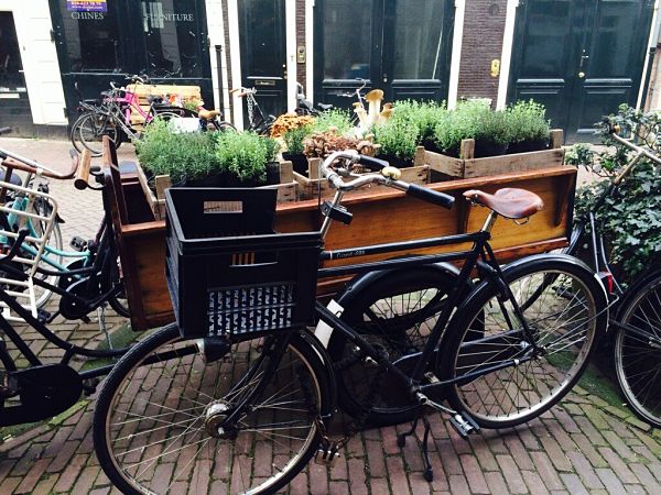 Amsterdam Lavinia Good Food plantjes